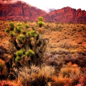 Red-Rock-Canyon-Joshua-Tree